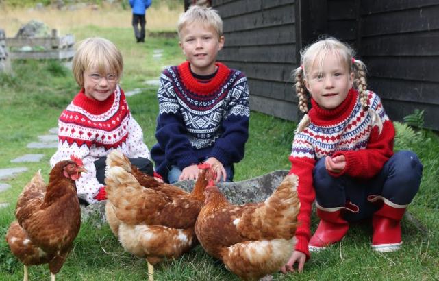 Barn og høner